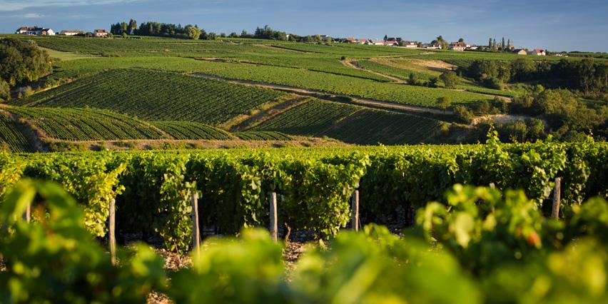 Le clos des vignes - Le clos des vignes neuville bosc ...